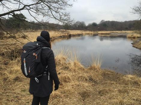 Vennen in nationaal park De Meinweg