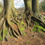 Prachtige boomwortels