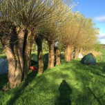 Het kampeerveldje achter de dijk op camping Rijnoever