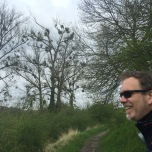 Maretakken in de bomen