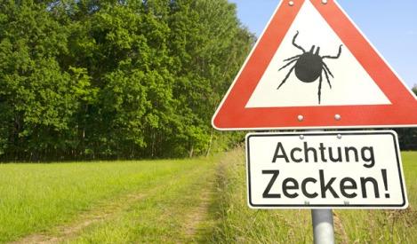 Ook in Nederland moet je oppassen voor teken (Zecken in het Duits)
