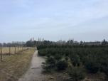 Biologische koeien en kerstbomen