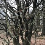 Bomen op de heide