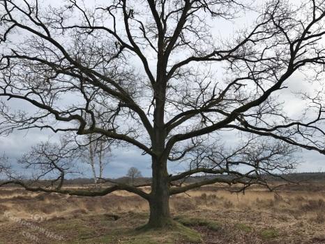 Prachtige boom