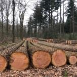 Ooit bomen, nu hout
