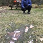 Bevroren plassen op Borger