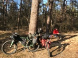 Pauze op een boomstronk